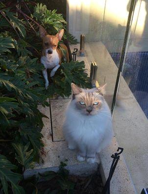 Oscar and Bentley - where were you!!