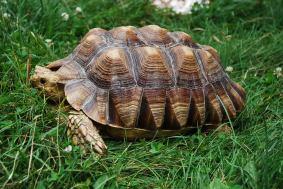 turtleslow.jpg